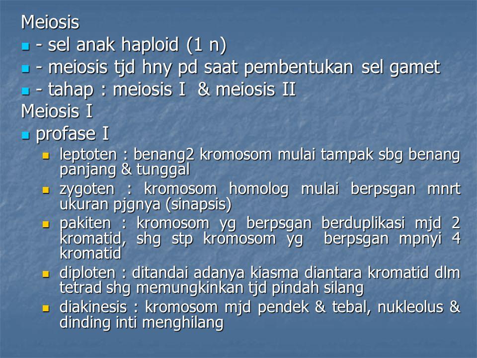 Meiosis - sel anak haploid (1 n) - sel anak haploid (1 n) - meiosis tjd hny pd saat pembentukan sel gamet - meiosis tjd hny pd saat pembentukan sel ga