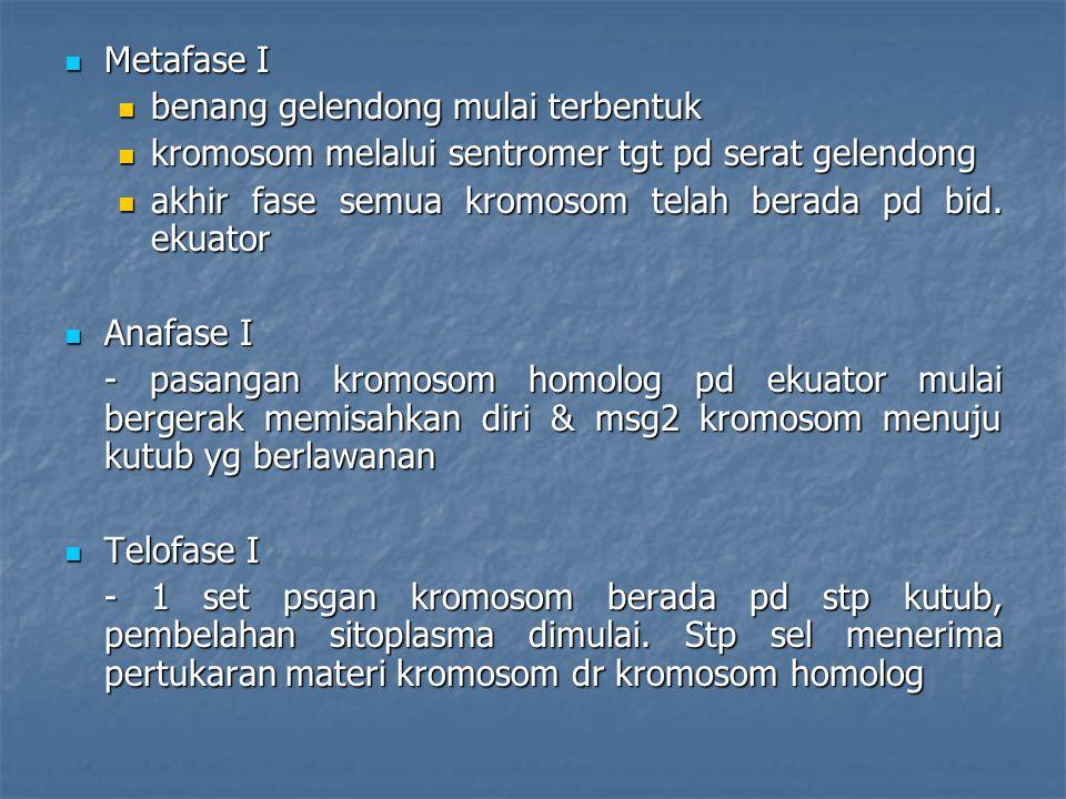Metafase I Metafase I benang gelendong mulai terbentuk benang gelendong mulai terbentuk kromosom melalui sentromer tgt pd serat gelendong kromosom mel