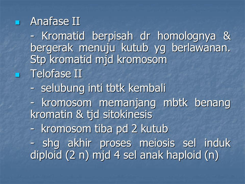 Anafase II Anafase II - Kromatid berpisah dr homolognya & bergerak menuju kutub yg berlawanan. Stp kromatid mjd kromosom Telofase II Telofase II - sel
