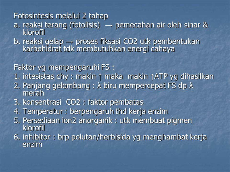 Fotosintesis melalui 2 tahap a. reaksi terang (fotolisis) → pemecahan air oleh sinar & klorofil b. reaksi gelap → proses fiksasi CO2 utk pembentukan k