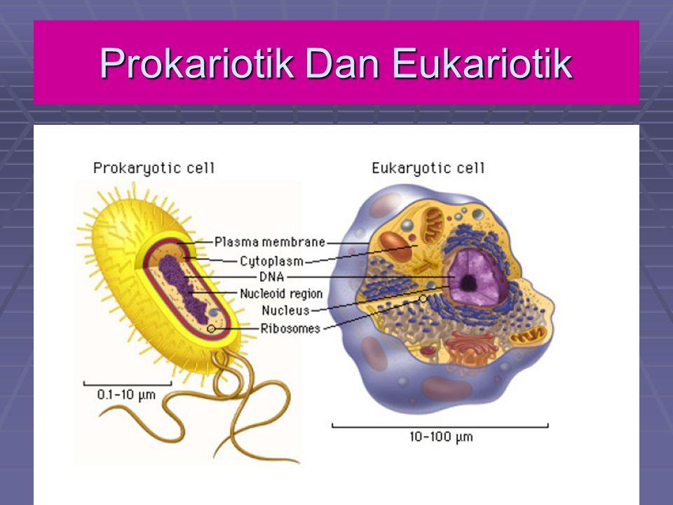 Prokariotik dan Eukariotik A.