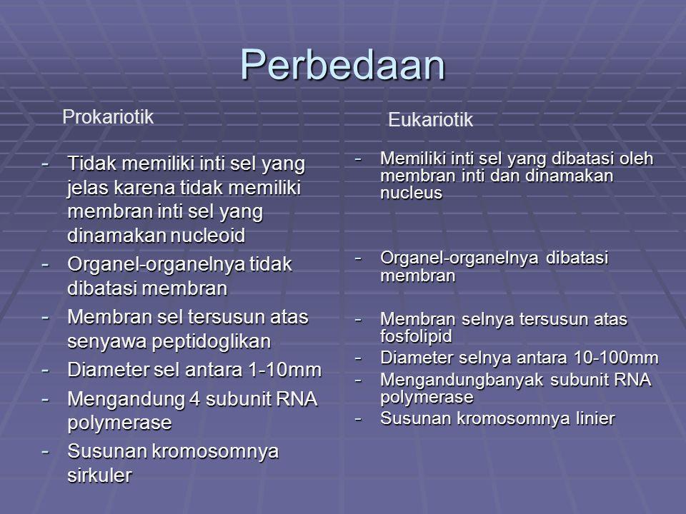 Perbedaan Prokariotik Eukariotik - Tidak memiliki inti sel yang jelas karena tidak memiliki membran inti sel yang dinamakan nucleoid - Organel-organel