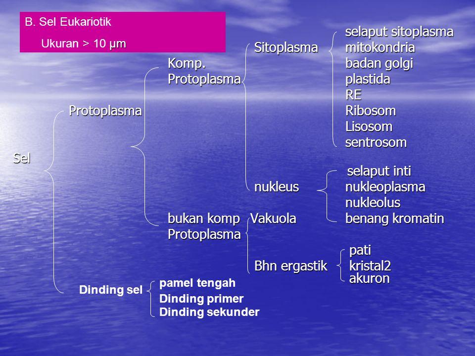 j.Vakuola (rongga sel) Rongga dlm sitoplasma, terbungkus membran (tonoplas).