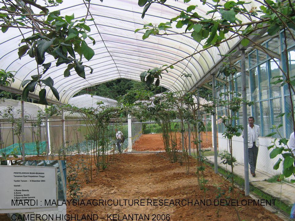 MARDI : MALAYSIA AGRICULTURE RESEARCH AND DEVELOPMENT CAMERON HIGHLAND – KELANTAN 2006