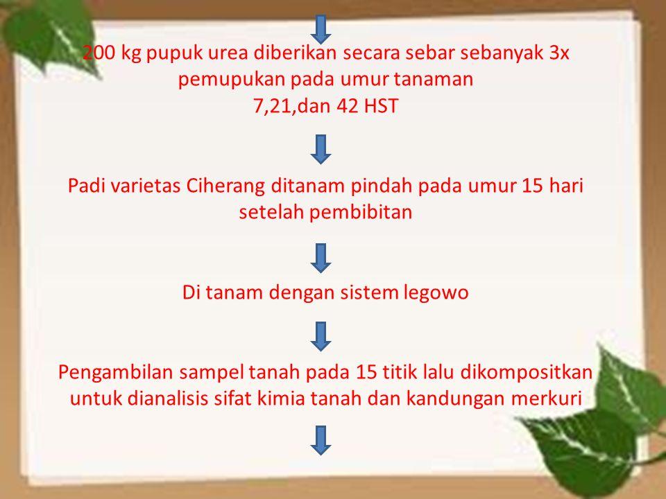 200 kg pupuk urea diberikan secara sebar sebanyak 3x pemupukan pada umur tanaman 7,21,dan 42 HST Padi varietas Ciherang ditanam pindah pada umur 15 ha