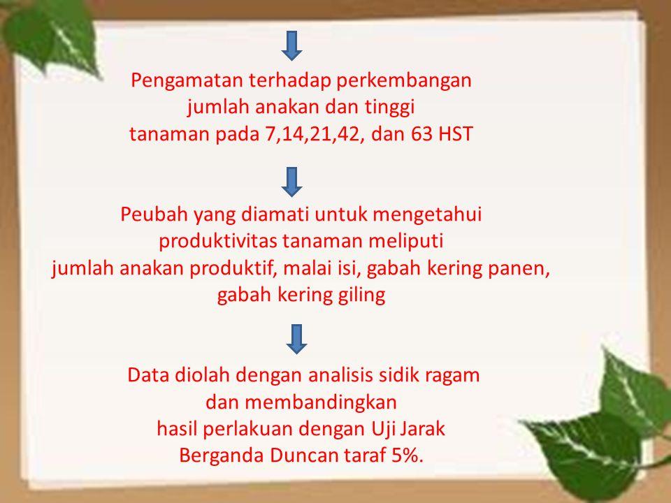 Pengamatan terhadap perkembangan jumlah anakan dan tinggi tanaman pada 7,14,21,42, dan 63 HST Peubah yang diamati untuk mengetahui produktivitas tanam