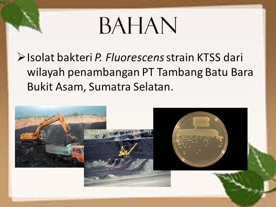Bahan  Isolat bakteri P. Fluorescens strain KTSS dari wilayah penambangan PT Tambang Batu Bara Bukit Asam, Sumatra Selatan.