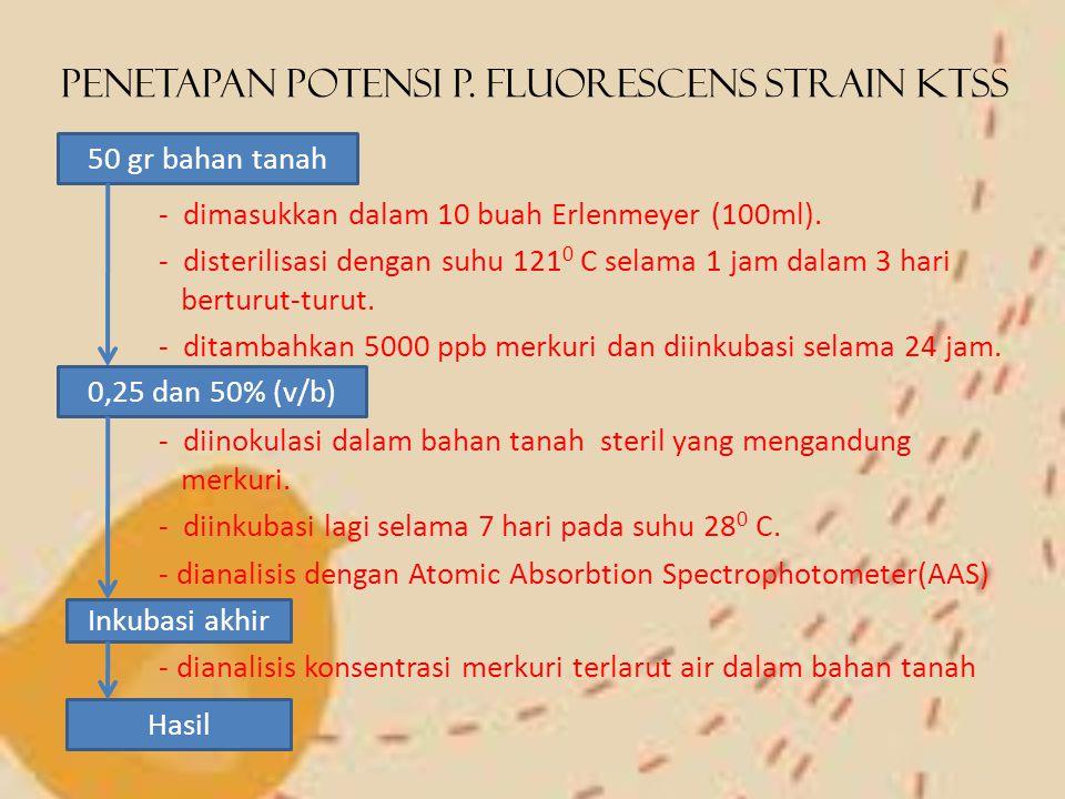 Penetapan Potensi P. Fluorescens strain KTSS - dimasukkan dalam 10 buah Erlenmeyer (100ml). - disterilisasi dengan suhu 121 0 C selama 1 jam dalam 3 h