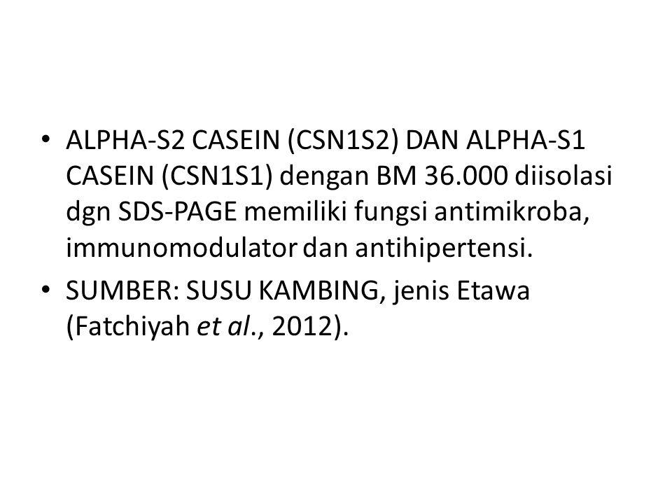 ALPHA-S2 CASEIN (CSN1S2) DAN ALPHA-S1 CASEIN (CSN1S1) dengan BM 36.000 diisolasi dgn SDS-PAGE memiliki fungsi antimikroba, immunomodulator dan antihipertensi.