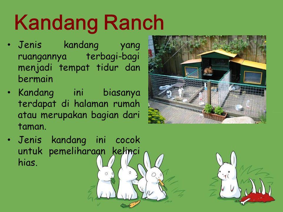 Kandang Ranch Jenis kandang yang ruangannya terbagi-bagi menjadi tempat tidur dan bermain Kandang ini biasanya terdapat di halaman rumah atau merupaka