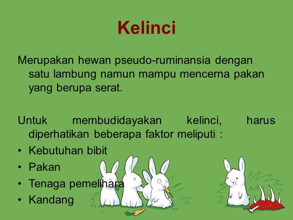Ternak kelinci dapat dikandangkan di luar dengan sistem perkandangan yang sangat sederhana.
