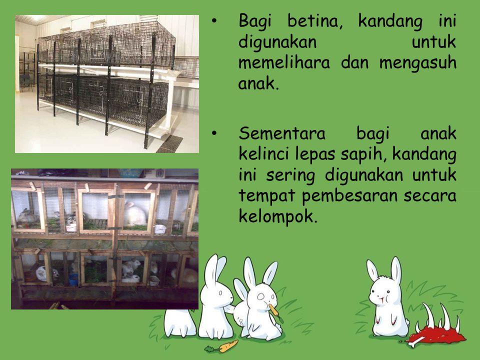 Bagi betina, kandang ini digunakan untuk memelihara dan mengasuh anak. Sementara bagi anak kelinci lepas sapih, kandang ini sering digunakan untuk tem