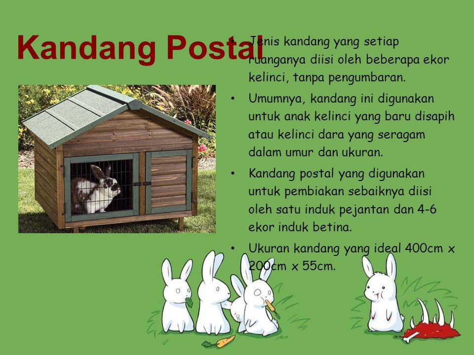 Kandang Postal Jenis kandang yang setiap ruanganya diisi oleh beberapa ekor kelinci, tanpa pengumbaran. Umumnya, kandang ini digunakan untuk anak keli
