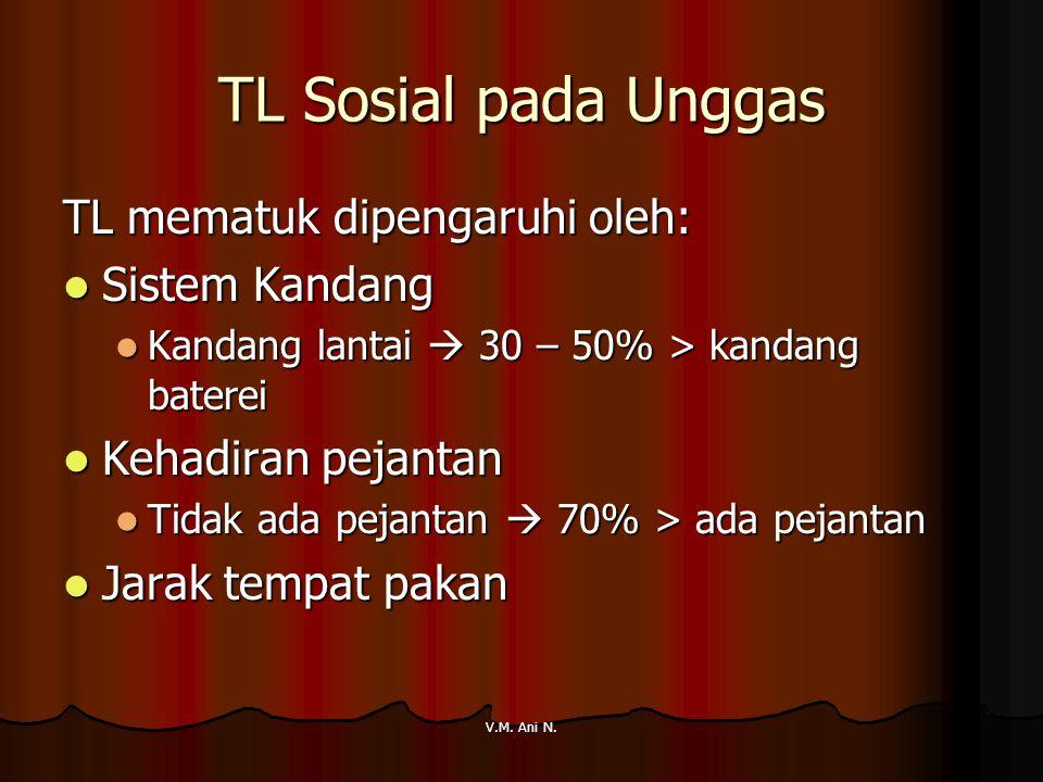 V.M. Ani N. TL Sosial pada Unggas TL mematuk dipengaruhi oleh: Sistem Kandang Sistem Kandang Kandang lantai  30 – 50% > kandang baterei Kandang lanta