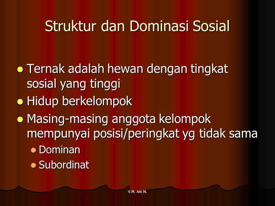 V.M. Ani N. Struktur dan Dominasi Sosial Ternak adalah hewan dengan tingkat sosial yang tinggi Ternak adalah hewan dengan tingkat sosial yang tinggi H