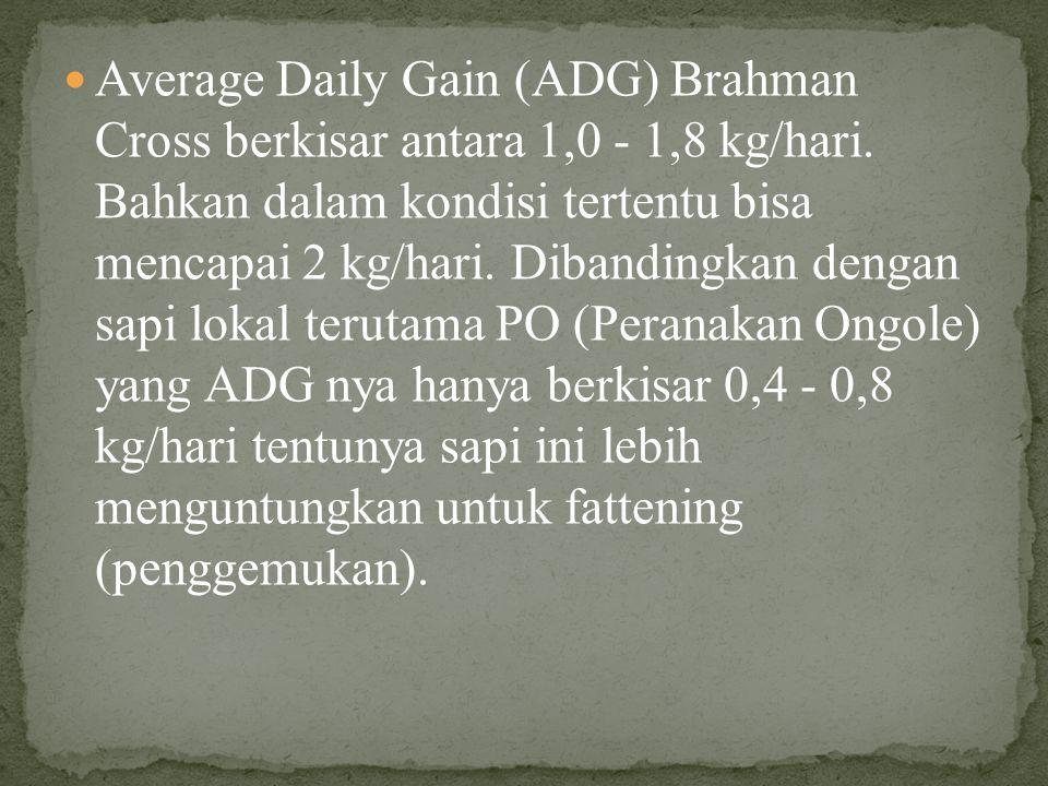 Average Daily Gain (ADG) Brahman Cross berkisar antara 1,0 - 1,8 kg/hari.