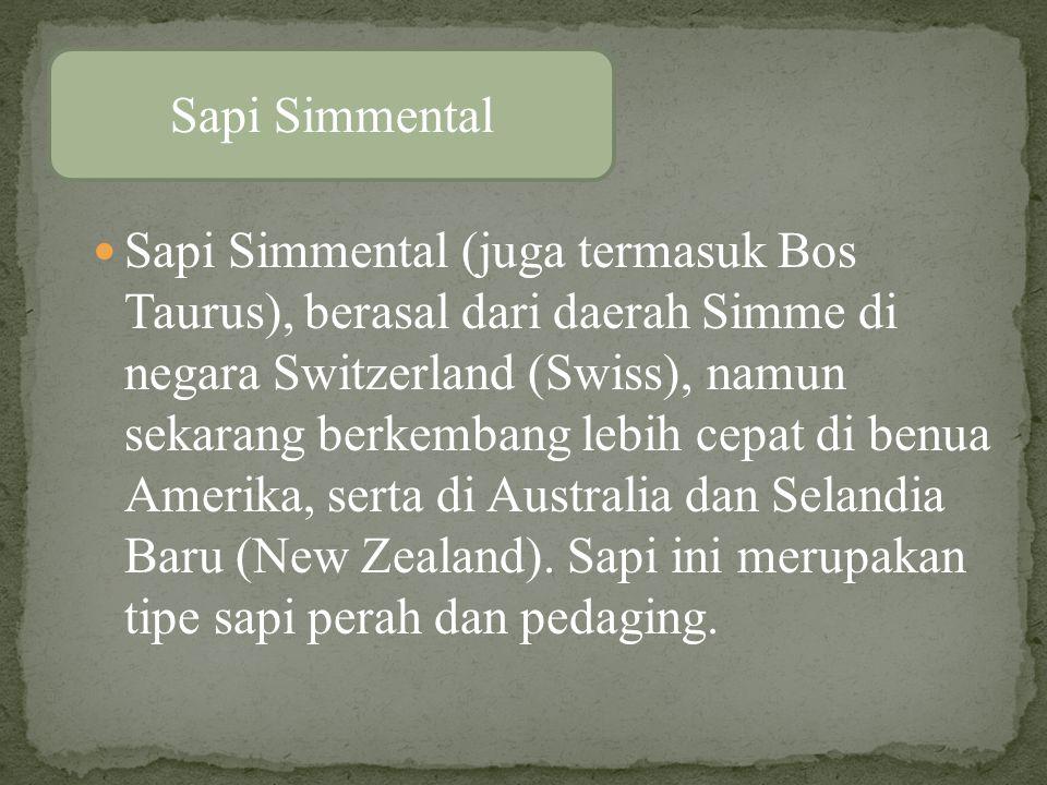 Sapi Simmental (juga termasuk Bos Taurus), berasal dari daerah Simme di negara Switzerland (Swiss), namun sekarang berkembang lebih cepat di benua Amerika, serta di Australia dan Selandia Baru (New Zealand).