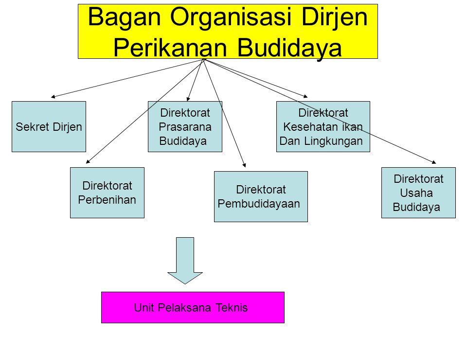 Bagan Organisasi Dirjen Perikanan Budidaya Sekret Dirjen Direktorat Perbenihan Direktorat Prasarana Budidaya Direktorat Pembudidayaan Direktorat Keseh