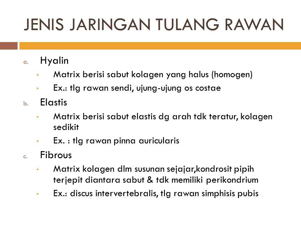 JENIS JARINGAN TULANG RAWAN a. Hyalin Matrix berisi sabut kolagen yang halus (homogen) Ex.: tlg rawan sendi, ujung-ujung os costae b. Elastis Matrix b