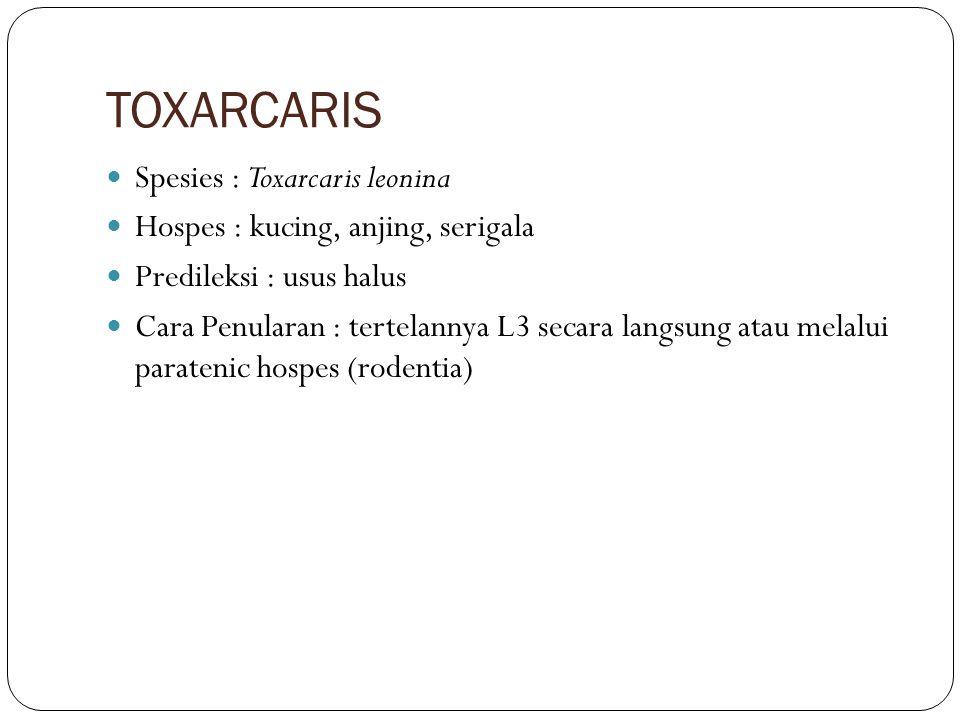TOXARCARIS Spesies : Toxarcaris leonina Hospes : kucing, anjing, serigala Predileksi : usus halus Cara Penularan : tertelannya L3 secara langsung atau