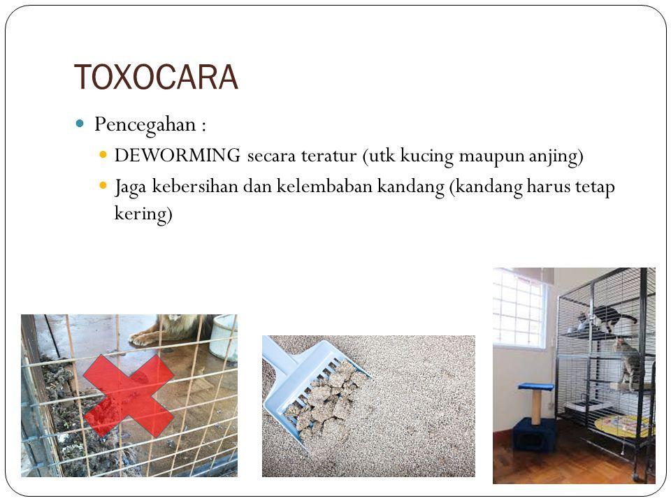 TOXOCARA Pencegahan : DEWORMING secara teratur (utk kucing maupun anjing) Jaga kebersihan dan kelembaban kandang (kandang harus tetap kering)