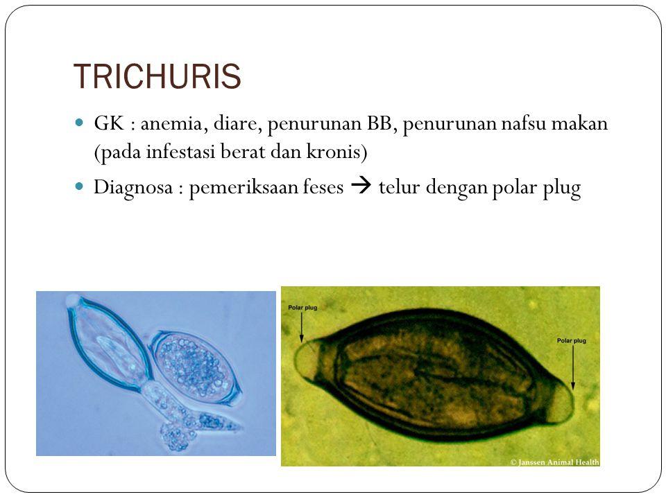 TRICHURIS GK : anemia, diare, penurunan BB, penurunan nafsu makan (pada infestasi berat dan kronis) Diagnosa : pemeriksaan feses  telur dengan polar