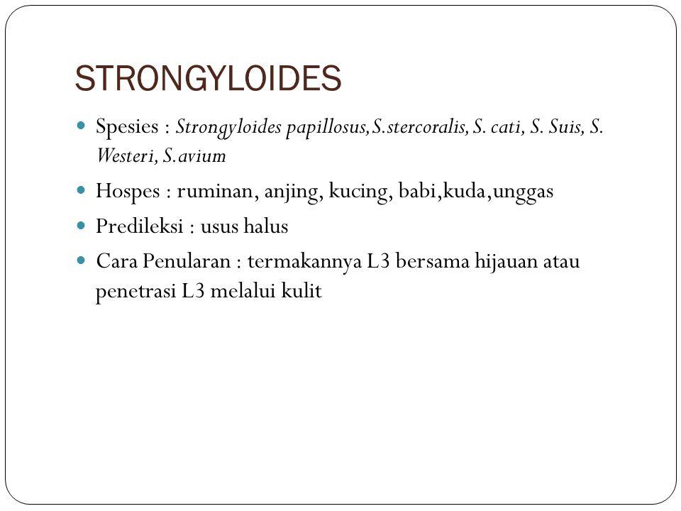 STRONGYLOIDES Spesies : Strongyloides papillosus,S.stercoralis, S. cati, S. Suis, S. Westeri, S.avium Hospes : ruminan, anjing, kucing, babi,kuda,ungg
