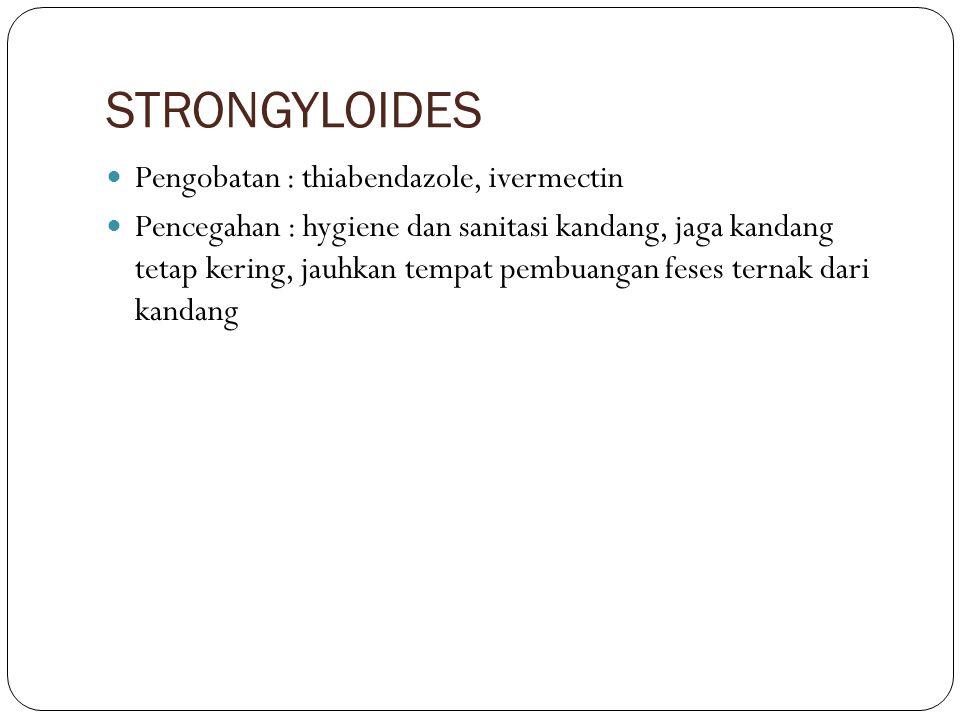 STRONGYLOIDES Pengobatan : thiabendazole, ivermectin Pencegahan : hygiene dan sanitasi kandang, jaga kandang tetap kering, jauhkan tempat pembuangan f