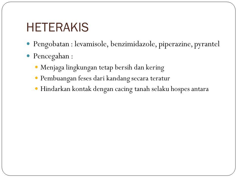 HETERAKIS Pengobatan : levamisole, benzimidazole, piperazine, pyrantel Pencegahan : Menjaga lingkungan tetap bersih dan kering Pembuangan feses dari k
