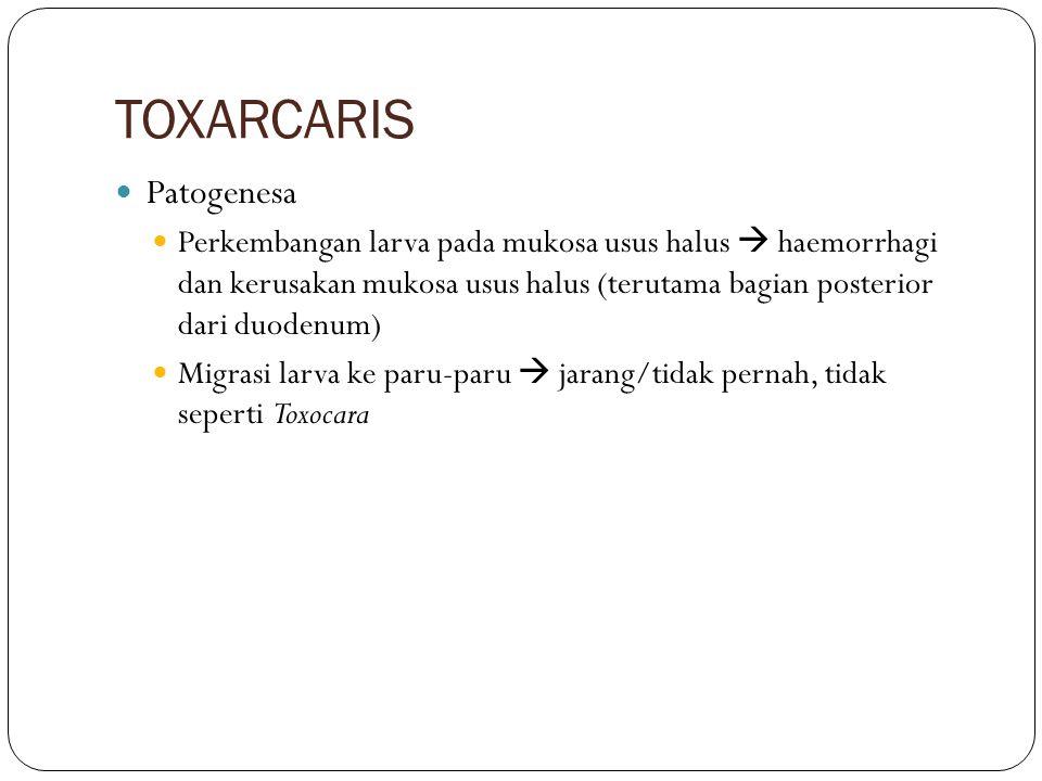 TOXARCARIS GK : Bulu kusam Emasiasi anemia Diare Abdomen membesar(pd infestasi yang banyak) Diagnosa Pemeriksaan feses  telur cacing