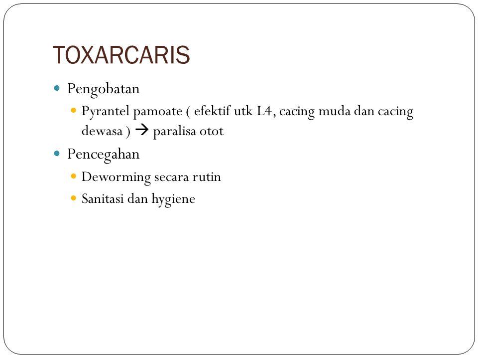 TOXOCARA Spesies : Toxocara canis, Toxocara cati Hospes : anjing, serigala, kucing Predileksi : usus halus Cara Penularan : Termakannya L2 oleh hospes utama atau hospes accidental (manusia)