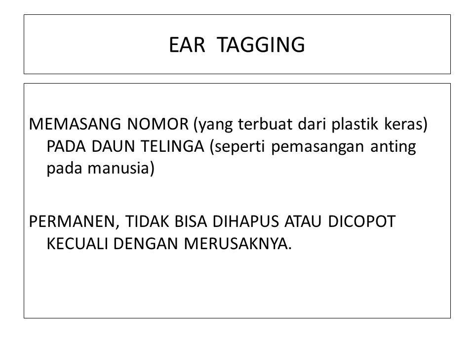 EAR TAGGING MEMASANG NOMOR (yang terbuat dari plastik keras) PADA DAUN TELINGA (seperti pemasangan anting pada manusia) PERMANEN, TIDAK BISA DIHAPUS A