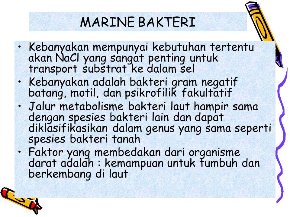 MARINE BAKTERI Kebanyakan mempunyai kebutuhan tertentu akan NaCl yang sangat penting untuk transport substrat ke dalam sel Kebanyakan adalah bakteri g