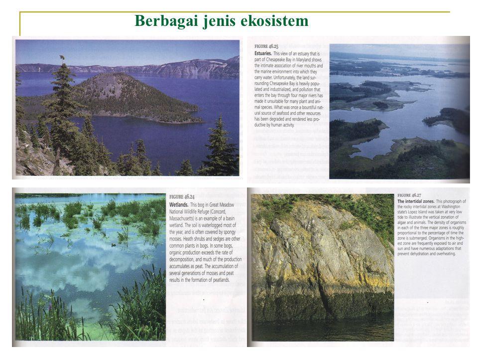 Tipe dari lingkungan perairan  Lingkungan air a) laut b) daratan -  bawah tanah : - air yang terdapat di sela- sela batu- batuan lapisan tanah - nutrien tersaring oleh tanah - hanya bisa mendukung sebagian kecil populasi bakteri -  air permukaan : lotik (mengalir) - rivers, spring, stream lentik (diam) - lakes, pounds, swamps, bugs