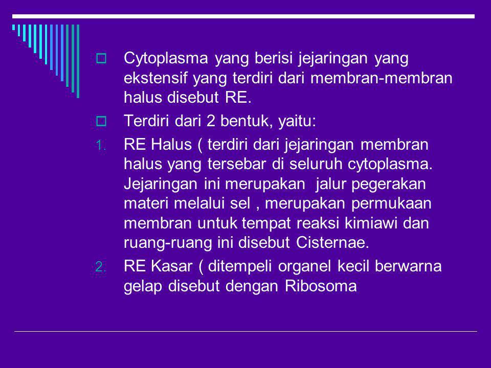  Cytoplasma yang berisi jejaringan yang ekstensif yang terdiri dari membran-membran halus disebut RE.  Terdiri dari 2 bentuk, yaitu: 1. RE Halus ( t