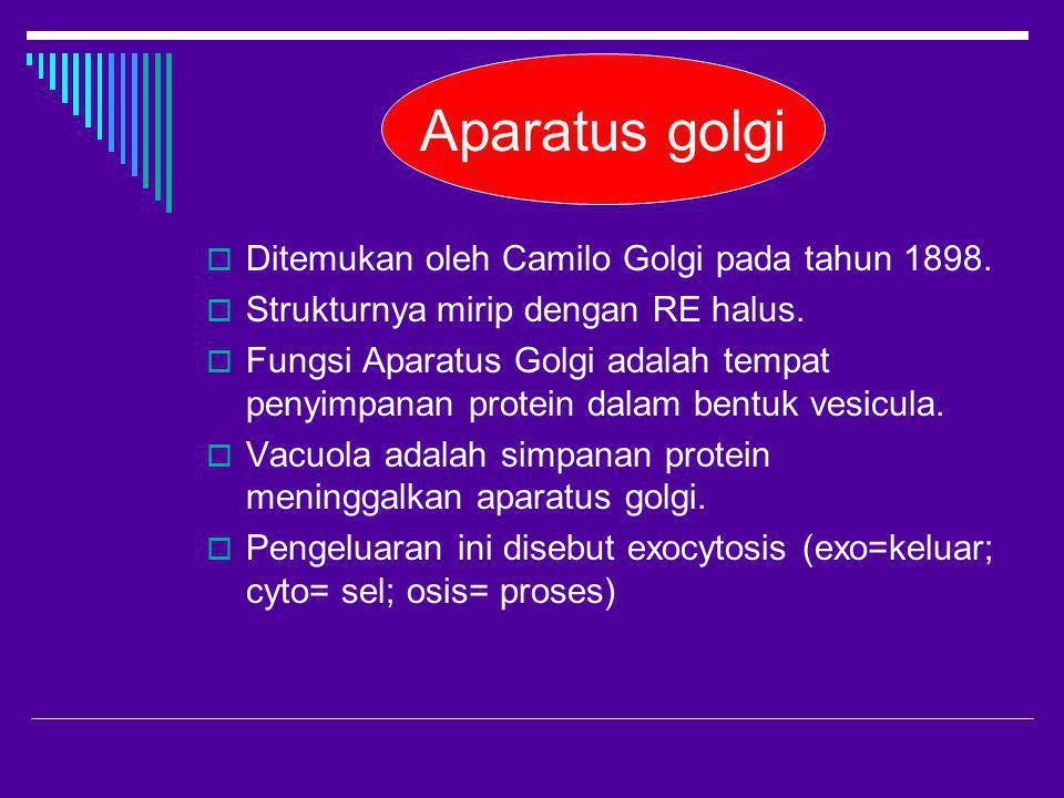 Aparatus golgi  Ditemukan oleh Camilo Golgi pada tahun 1898.  Strukturnya mirip dengan RE halus.  Fungsi Aparatus Golgi adalah tempat penyimpanan p
