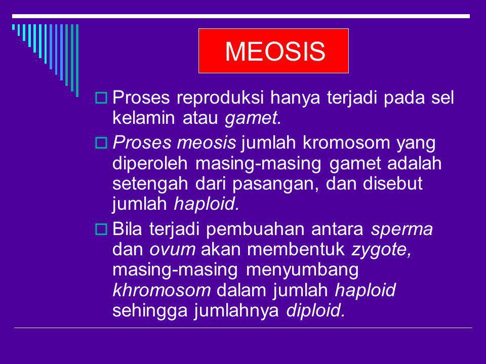 MEOSIS  Proses reproduksi hanya terjadi pada sel kelamin atau gamet.  Proses meosis jumlah kromosom yang diperoleh masing-masing gamet adalah seteng