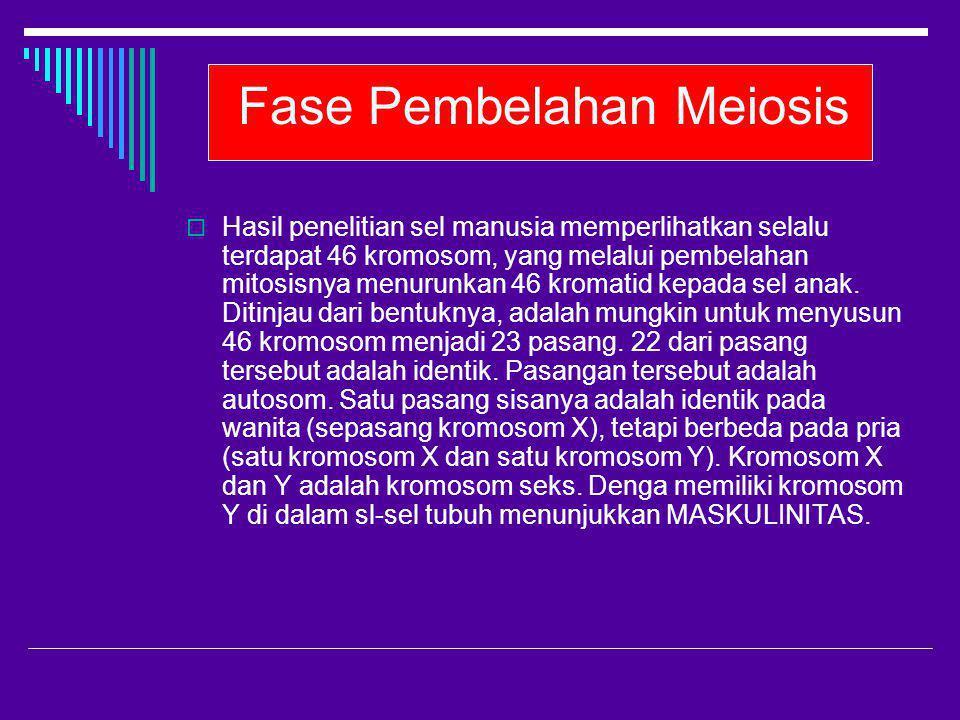 Fase Pembelahan Meiosis  Hasil penelitian sel manusia memperlihatkan selalu terdapat 46 kromosom, yang melalui pembelahan mitosisnya menurunkan 46 kr