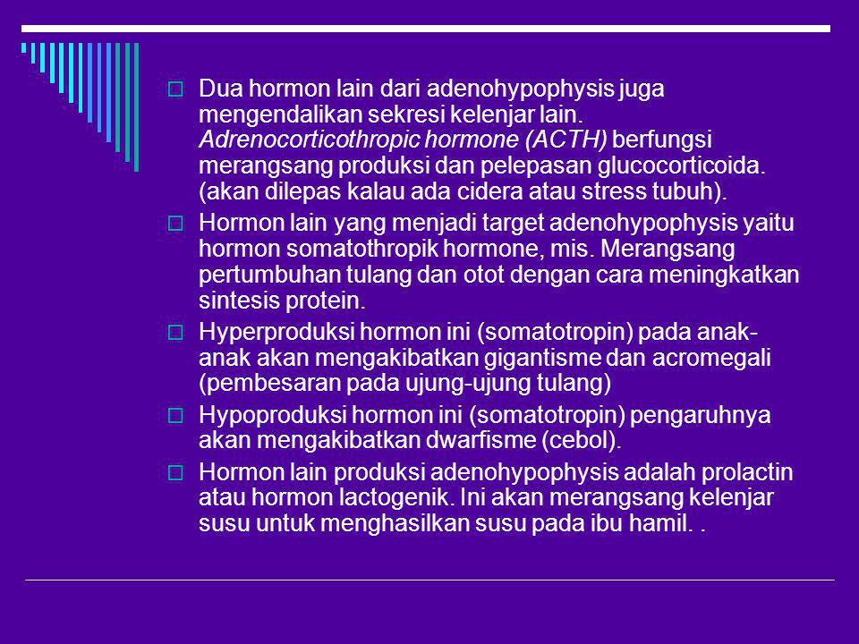  Dua hormon lain dari adenohypophysis juga mengendalikan sekresi kelenjar lain. Adrenocorticothropic hormone (ACTH) berfungsi merangsang produksi dan