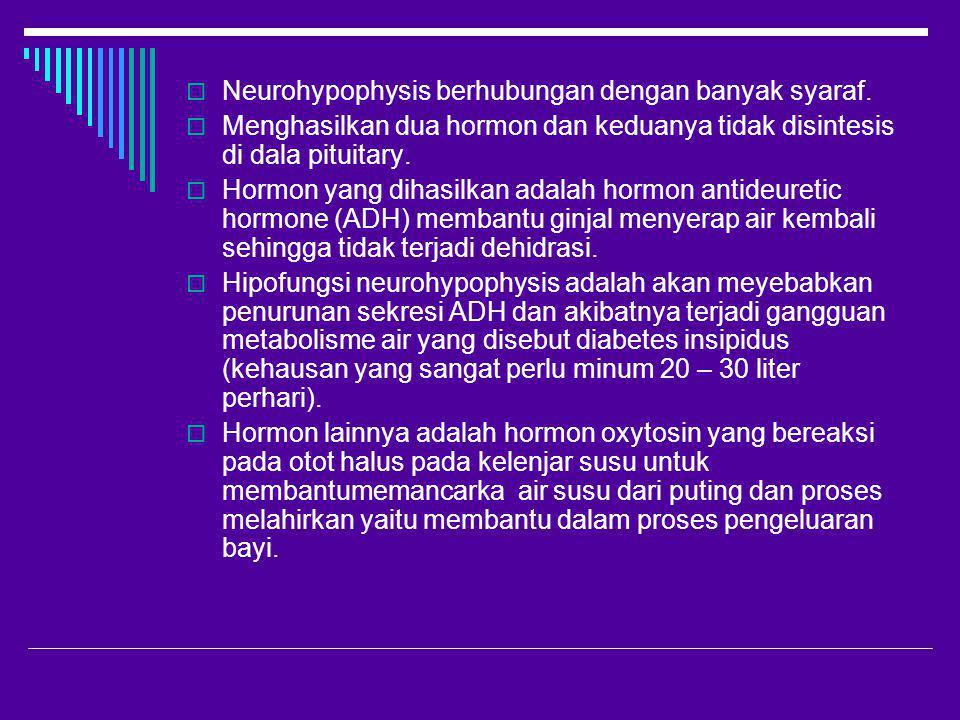  Neurohypophysis berhubungan dengan banyak syaraf.  Menghasilkan dua hormon dan keduanya tidak disintesis di dala pituitary.  Hormon yang dihasilka