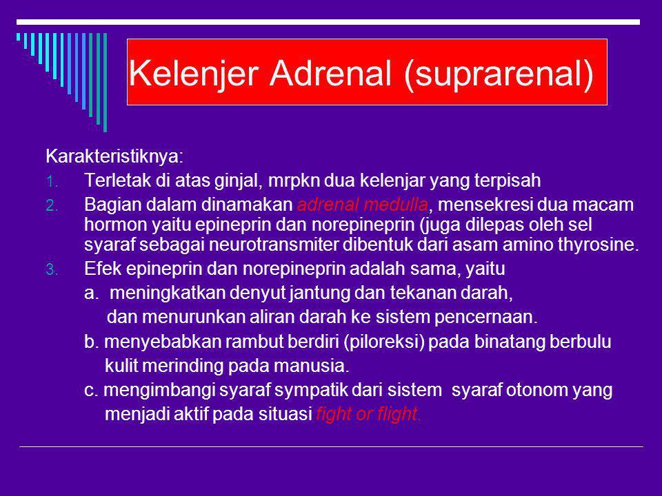 Kelenjer Adrenal (suprarenal) Karakteristiknya: 1. Terletak di atas ginjal, mrpkn dua kelenjar yang terpisah 2. Bagian dalam dinamakan adrenal medulla