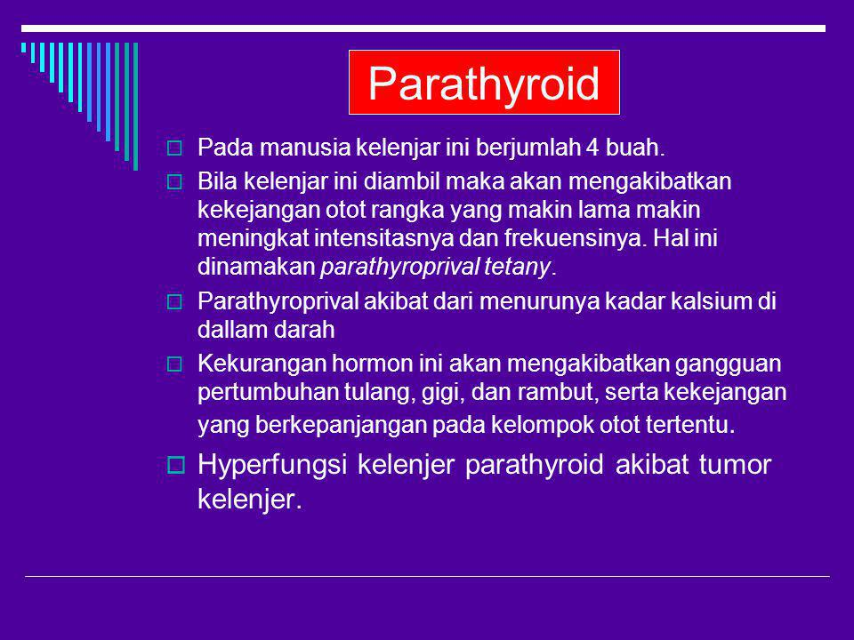 Parathyroid  Pada manusia kelenjar ini berjumlah 4 buah.  Bila kelenjar ini diambil maka akan mengakibatkan kekejangan otot rangka yang makin lama m