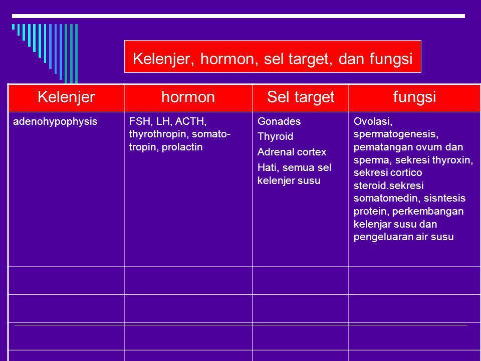 Kelenjer, hormon, sel target, dan fungsi KelenjerhormonSel targetfungsi adenohypophysisFSH, LH, ACTH, thyrothropin, somato- tropin, prolactin Gonades