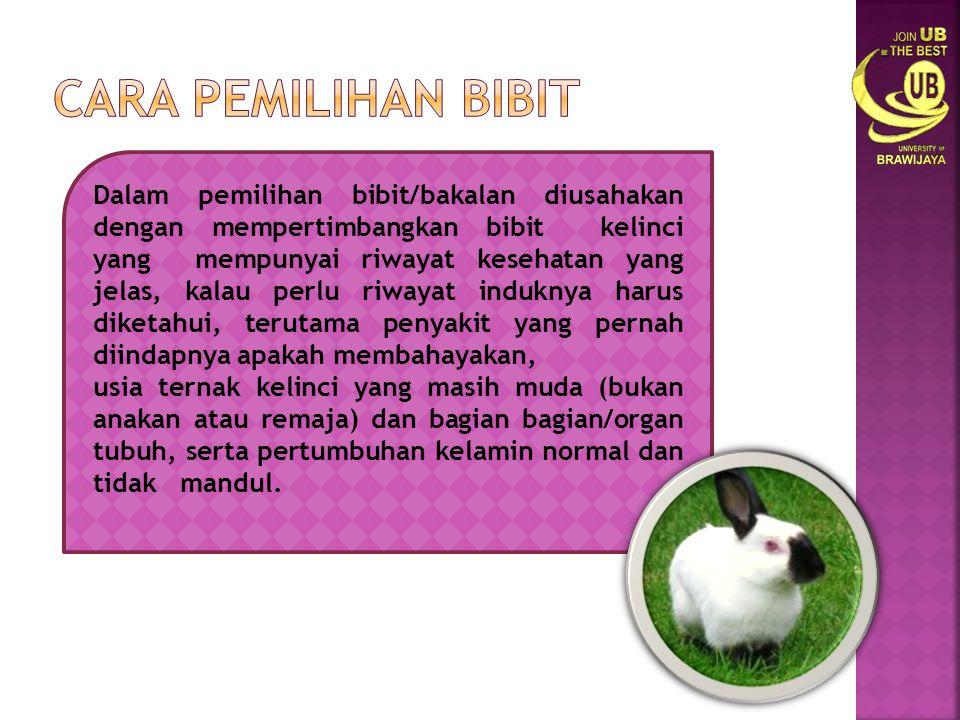  Pada awalnya kelinci merupakan hewan liar yang hidup di Afrika hingga daratan Eropa.