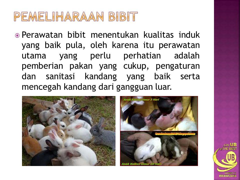  Bila peternakan bertujuan untuk daging, dipilih jenis kelinci yang berbobot badan dan tinggi dengan perdagingan yang baik.