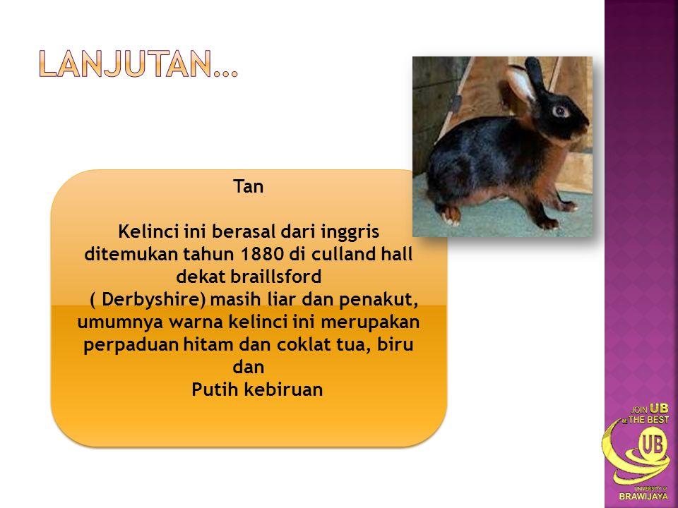 Satin Satin adalah jenis kelinci yang berasal dari amerika serikat,ditemukan pada tahun 1930 an,kulitnya tebal dengan bulu agak lebat dan lurus.