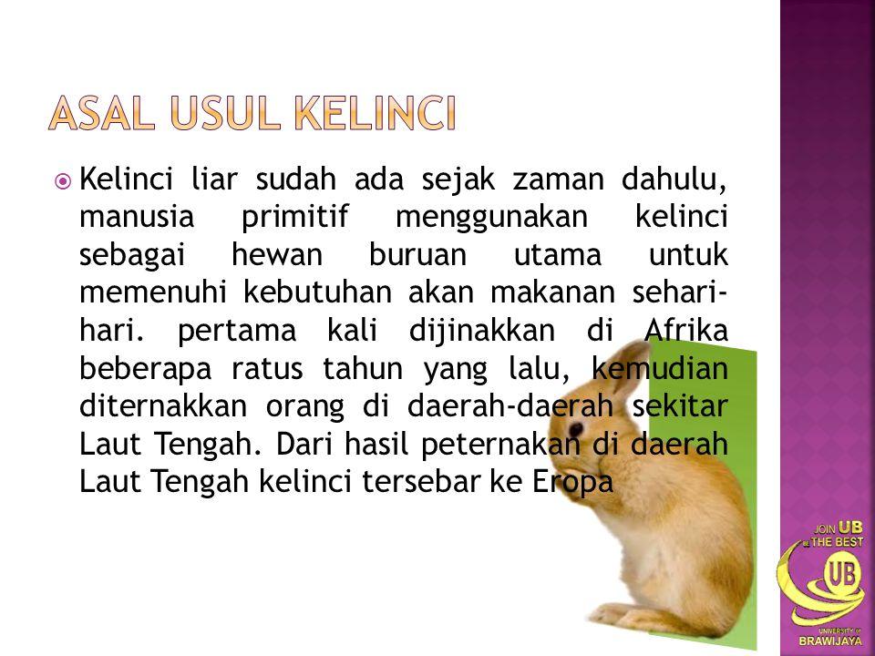  Kelinci hidup di berbagai wilayah di dunia.