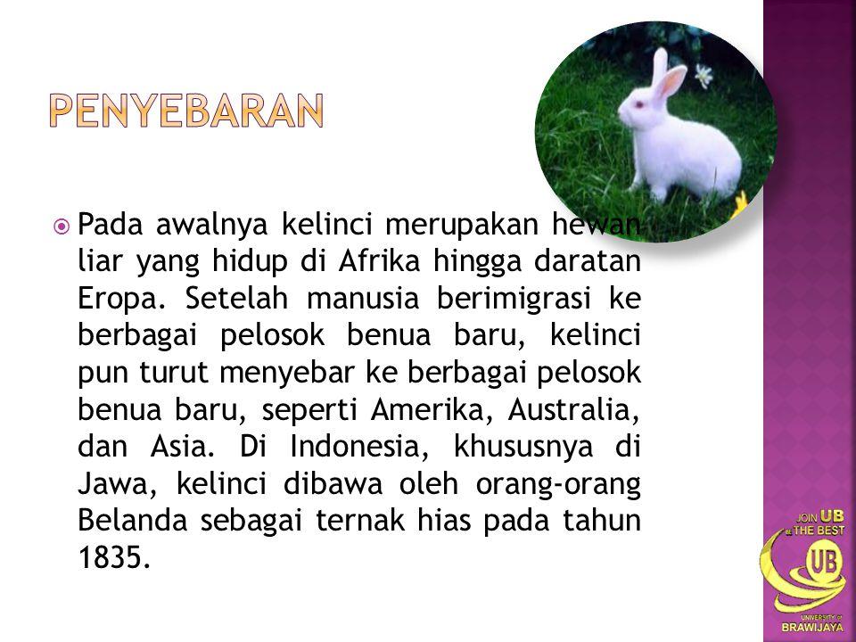  Kelinci liar sudah ada sejak zaman dahulu, manusia primitif menggunakan kelinci sebagai hewan buruan utama untuk memenuhi kebutuhan akan makanan sehari- hari.