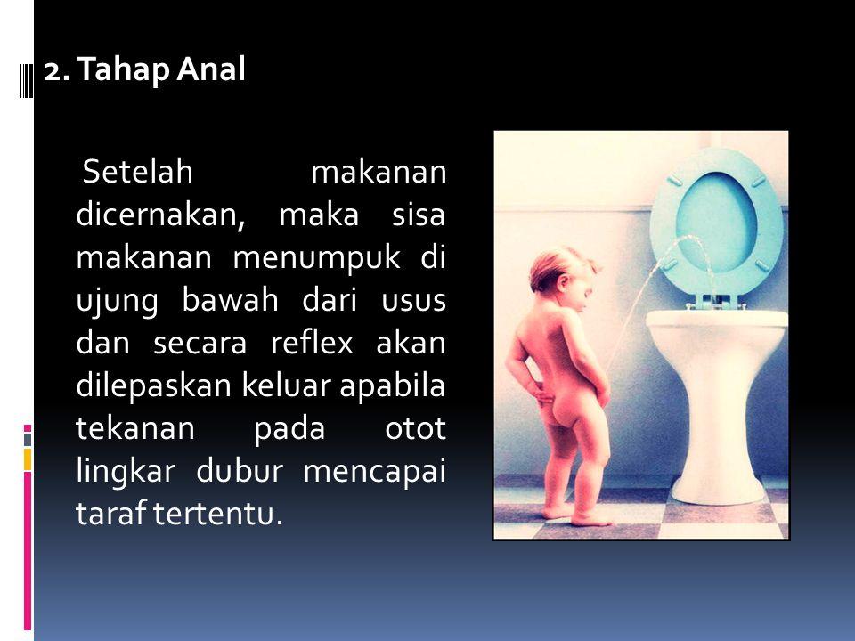 2. Tahap Anal Setelah makanan dicernakan, maka sisa makanan menumpuk di ujung bawah dari usus dan secara reflex akan dilepaskan keluar apabila tekanan