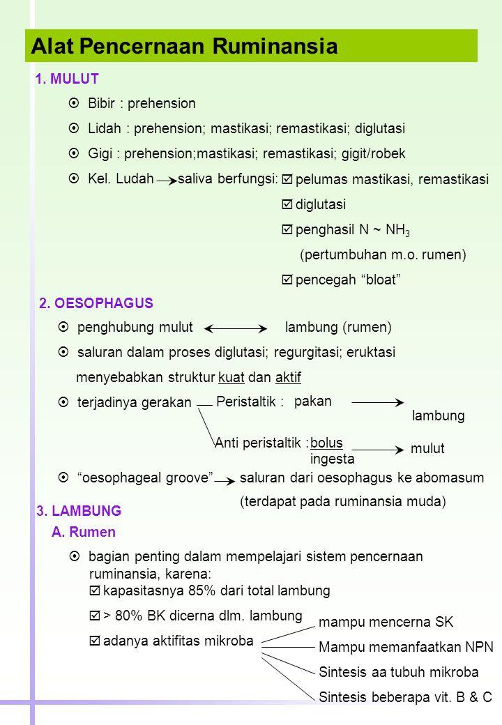 Alat Pencernaan Ruminansia 1. MULUT  Bibir : prehension  Lidah : prehension; mastikasi; remastikasi; diglutasi  Gigi : prehension;mastikasi; remast
